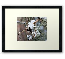 Pitch Pine Cone Framed Print