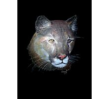 Cougar Photographic Print