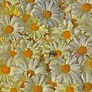 Yellow, my sunshine color. by elisab