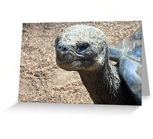 Galapagas Turtle Greeting Card