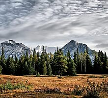 In Kananaskis Country by Vickie Emms