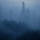 Trees in the Mist by Cheryl  Lunde