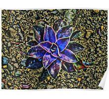 The Desert Flower Poster