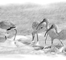 Ibis in Snow? - Pencil by Donna Adamski