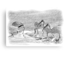Ibis in Snow? - Pencil Canvas Print