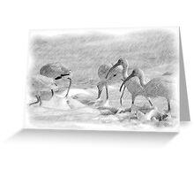 Ibis in Snow? - Pencil Greeting Card