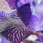 Textured Purple Iris by Marilyn Harris