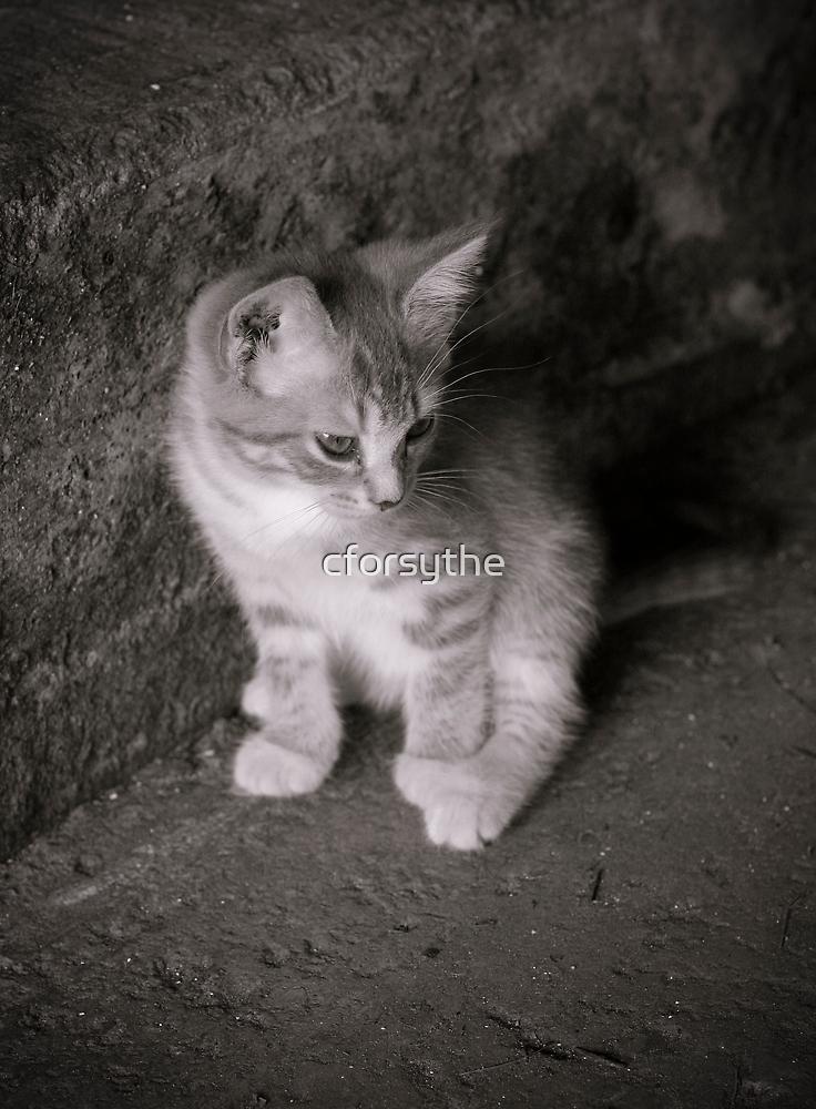 Barn Kitten by cforsythe