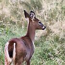 Deer 2 by Teresa Zieba