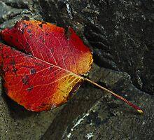 Autumn Ends as a Single Leaf Falls by J. D. Adsit