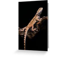 Central Bearded Dragon [Pogona vitticeps] Greeting Card