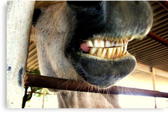 Just had mah teeth cleaned! by down23