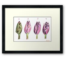 Collected Study of a Cut Tulip Framed Print