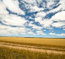 Wheat Belt - South Australia by Stephen Permezel
