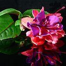 Fuchsia Reflection II by Tom Newman