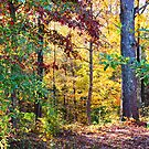 Stroll Through The Woods by Ginger  Barritt