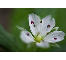 White and Purple Flower Photographic Print