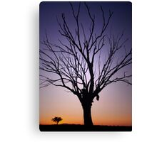 Manilla, North West NSW,  dead tree at sunset Canvas Print