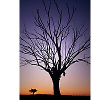 Manilla, North West NSW,  dead tree at sunset Photographic Print