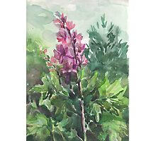 watercolor flowers Photographic Print