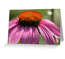 Echinacea  Purple Coneflower Greeting Card