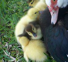 momma duck  by tannyskori