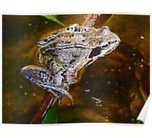 Fractual Frog Poster