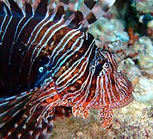 Lion fish by lilithlita