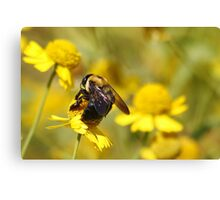 Bee Bokeh Canvas Print