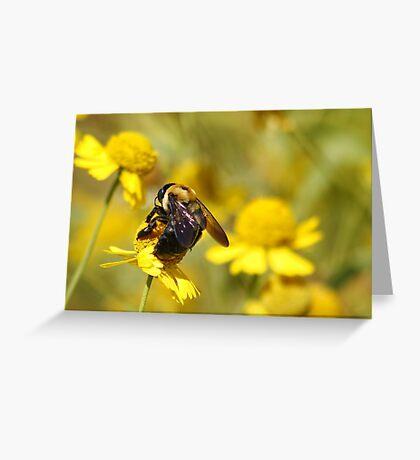 Bee Bokeh Greeting Card