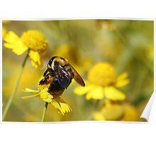 Bee Bokeh Poster