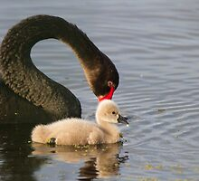 Parental Love by byronbackyard