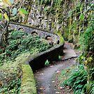 Mossy Trail by Cheryl  Lunde