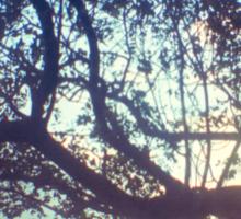Sunset trees ttv photograph Sticker