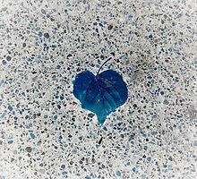 Blue Heart by Lucy Wright