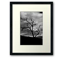 Lone Ghost Tree Framed Print
