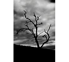Lone Ghost Tree Photographic Print