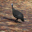 Visiting guinea fowl by fourthangel