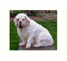 Clumber Spaniel...Sumerstraw's I'll Fly Again..Gil.  Art Print