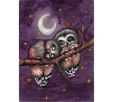 Owls in love Photographic Print