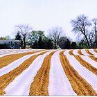 Spring Stripes by clizzio