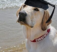 Obedience School Grad by Maria Dryfhout