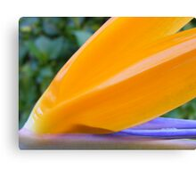 up close to the tongue of a strelitzia - Bird of Paradise flower Canvas Print