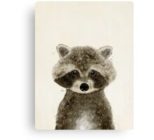little raccoon Canvas Print