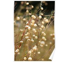 Marshmallow Stems Poster