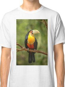 Toucan in Tree, Iguazu Falls, Brazil Classic T-Shirt