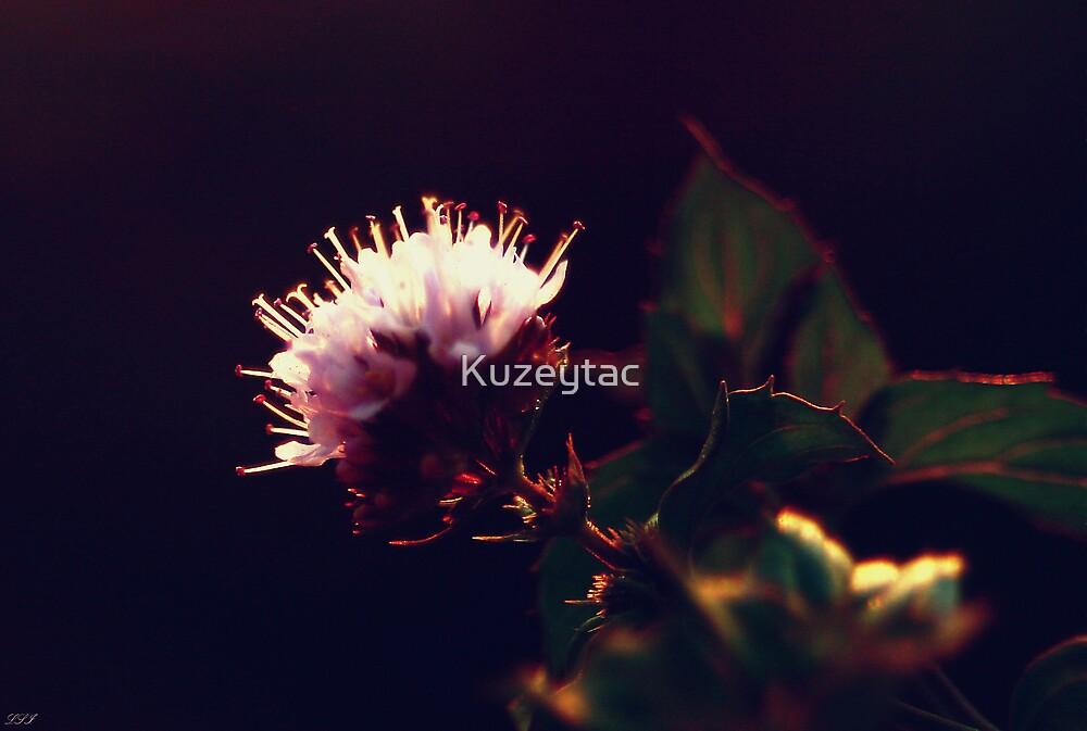 Lavender Fever by Kuzeytac