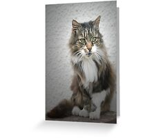 Cat on a Wall Greeting Card