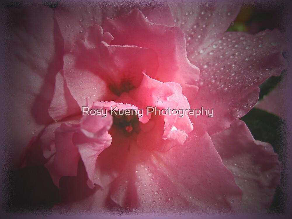 Azalea in the Spotlight by Rosy Kueng