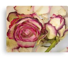 White pink roses Canvas Print
